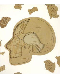 Puzzle czaszka