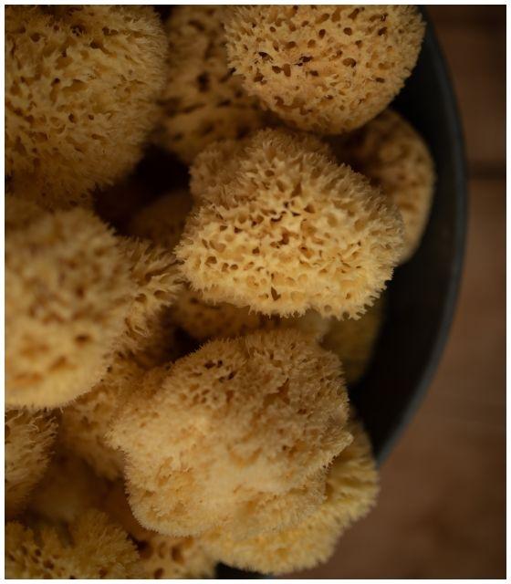 Naturalna gąbka morska Chalutier dla dorosłych